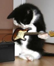 guitar-kitten.jpg
